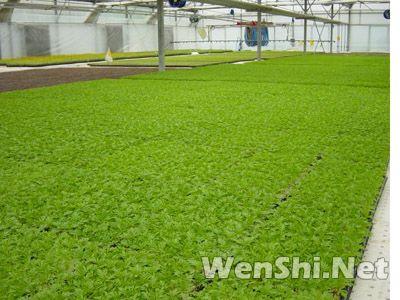 日光温室用蔬菜穴盘进行工厂化蔬菜育苗技术讲解