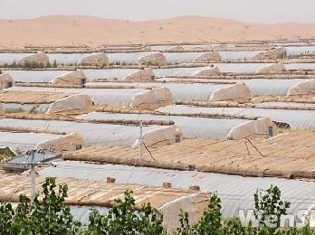 中卫市沙漠温棚打造生态经济型治理沙漠典范