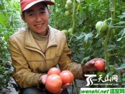 八十九团在高寒地区种植茄果类蔬菜成功应市