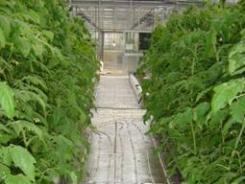 国内第一套单井抽灌浅层地能温室环境调控系统在中国农业科学院落成