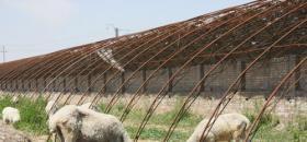 30个温室大棚闲置两年 扶贫项目沦为村民负担