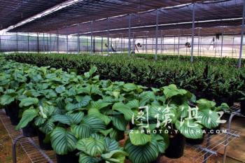 湛江国家级林木种苗示范基地