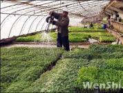 温室大棚蔬菜高产的六大误区