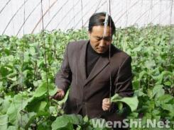 阳高温室大棚年产值近3亿元