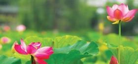 花溪区大力发展农业生态旅游