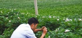 威宁高原生态旅游亮点马铃薯花