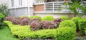 园林绿化养护措施
