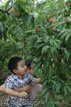 水果成熟时 到幸福公路采果去