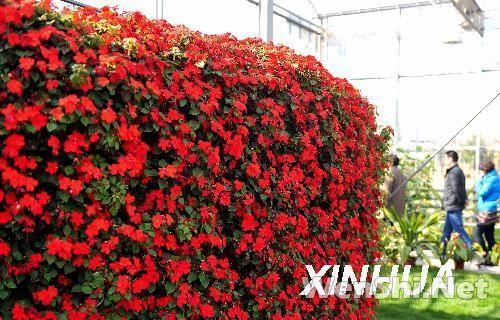 江苏太仓市现代农业展示馆展示高科技农业栽培技术和生态景观