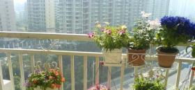 遮荫防晒勤浇水 花卉越夏有绝招