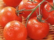 日光温室樱桃番茄冬春茬栽培技术