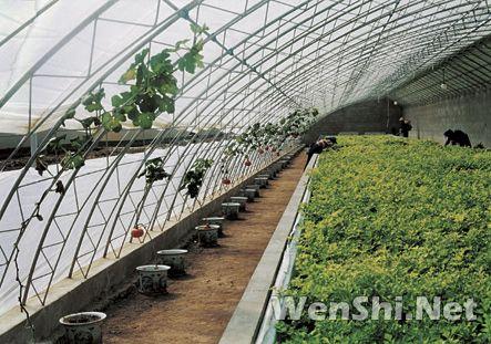 日光温室建筑设计