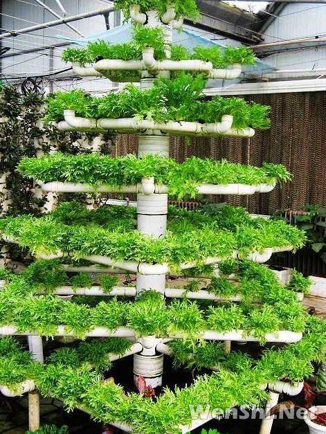 温室番茄、生菜、鸡腿菇高效立体种植技术